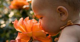 Những mùi hương trẻ nên tránh xa vì gây ảnh hưởng nghiêm trọng tới sức khỏe